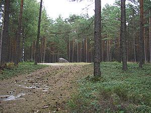 bild 3 der bickelstein heute auf einer lichtung umgeben von kiefernwald die. Black Bedroom Furniture Sets. Home Design Ideas